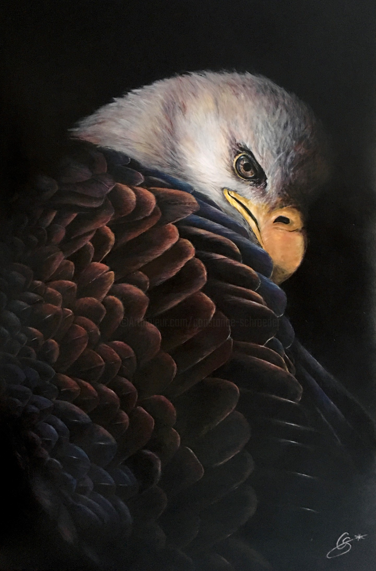 Constance Schroeder - Eagle